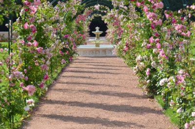 Grande roseraie